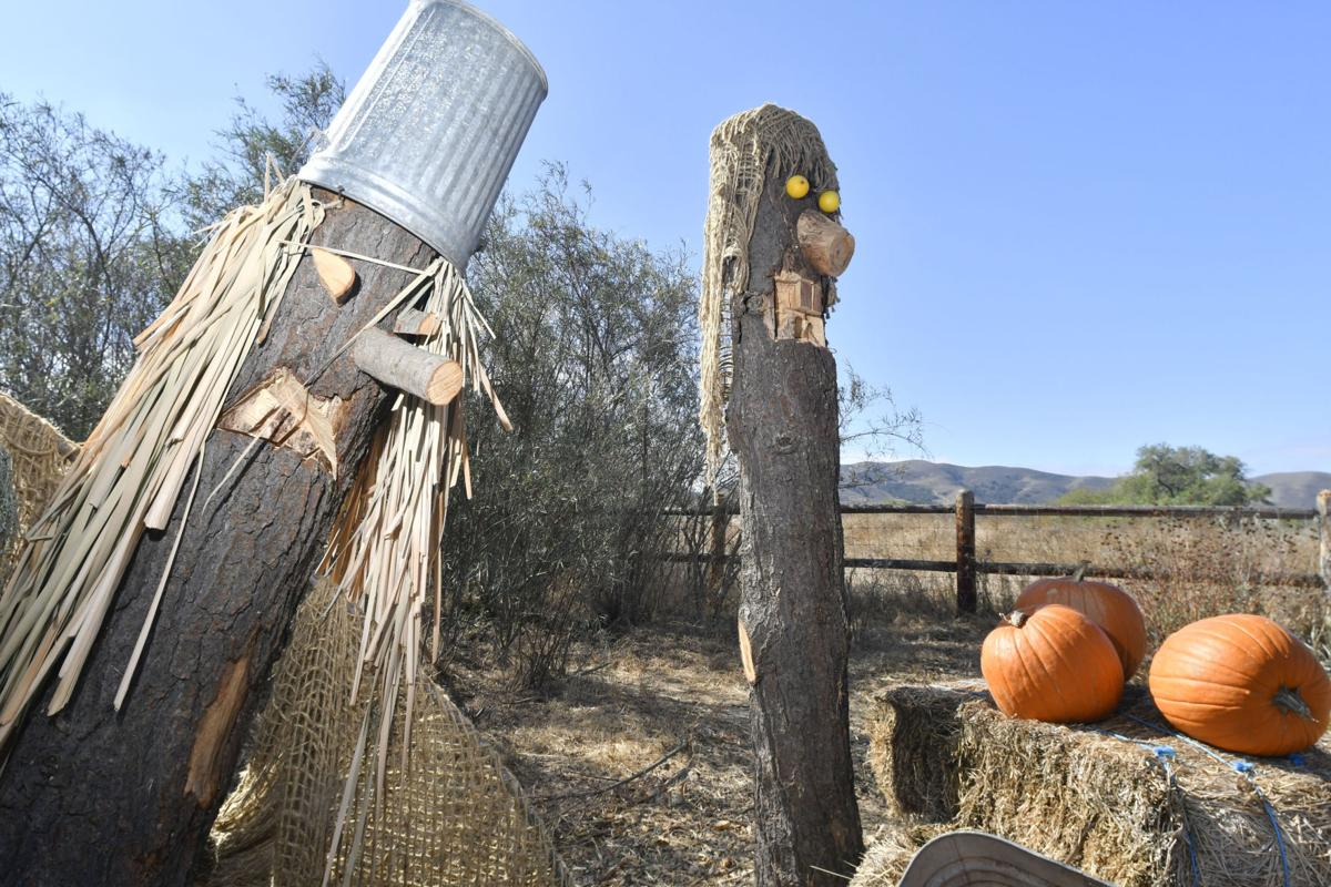 2016 Scarecrow winners - SY Valley Botanic Garden
