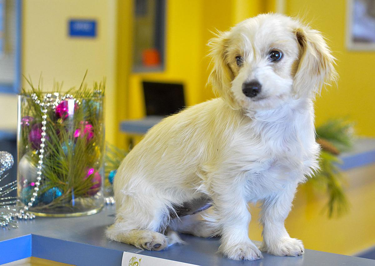 Animals in search of a Home for the Holidays up for adoption