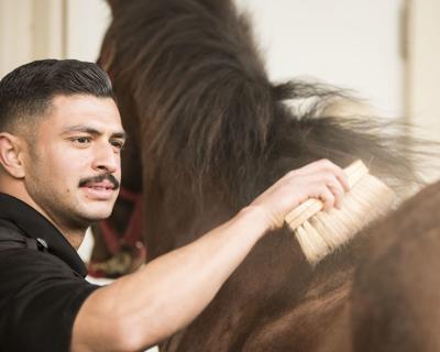Not just horsing around