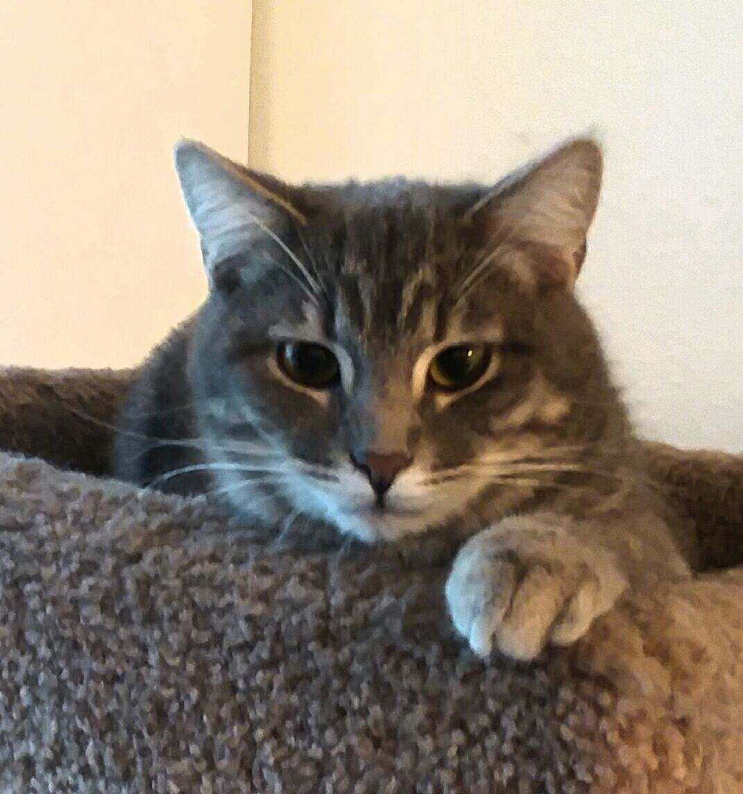 VIVA Pet of the Week -- GreyJoy