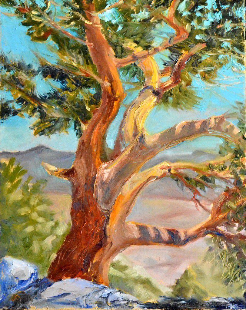 Eastern Sierra Juniper