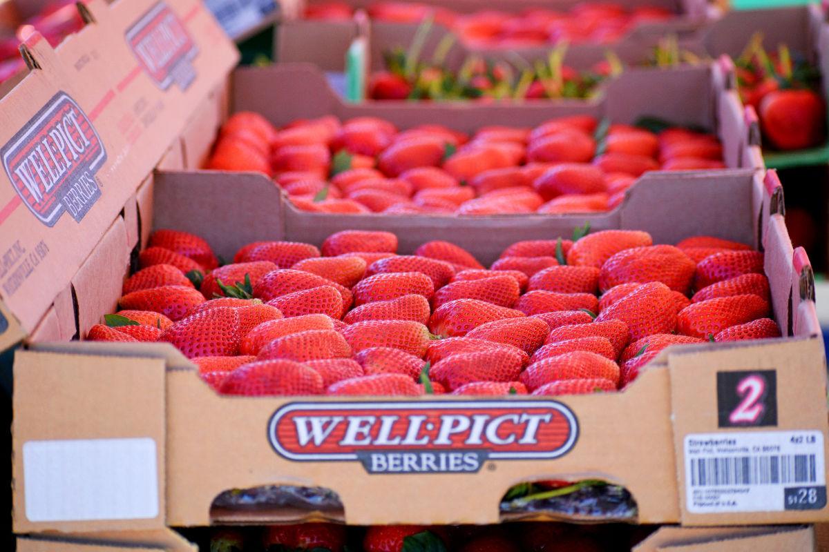 042821-smt-news-strawberry-cruise-001