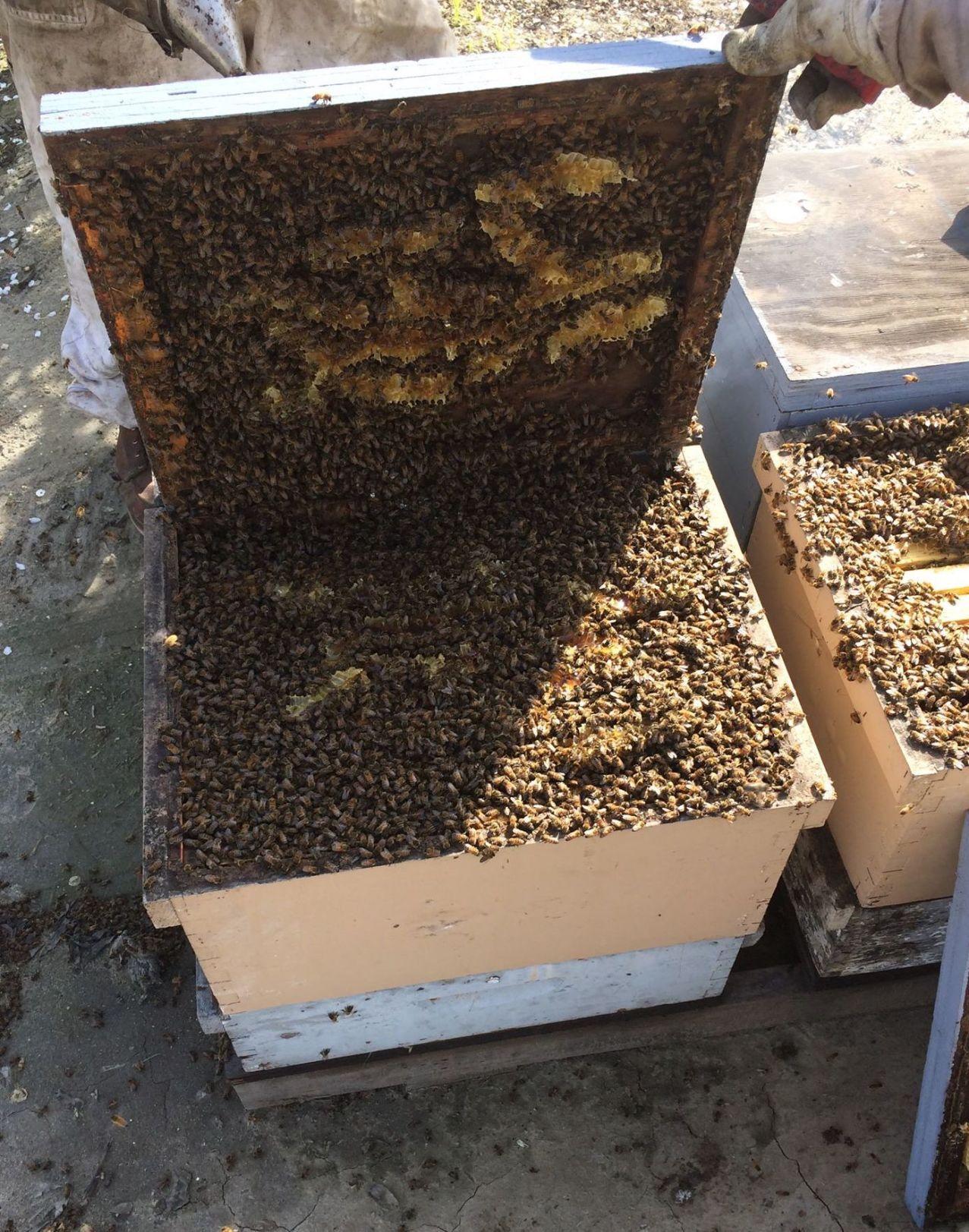 102220 Beekeeping 2