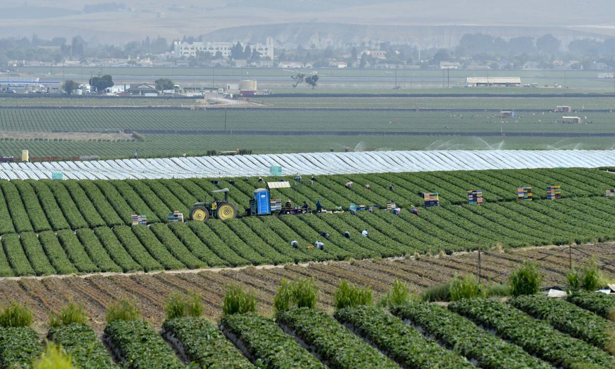 071918 Agriculture PHOTOSTOCK.jpg