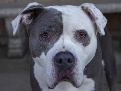 La PAWS Pet of the Week -- Rumble