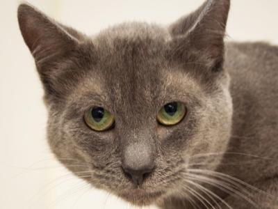 011519 CAPA Pet of the Week