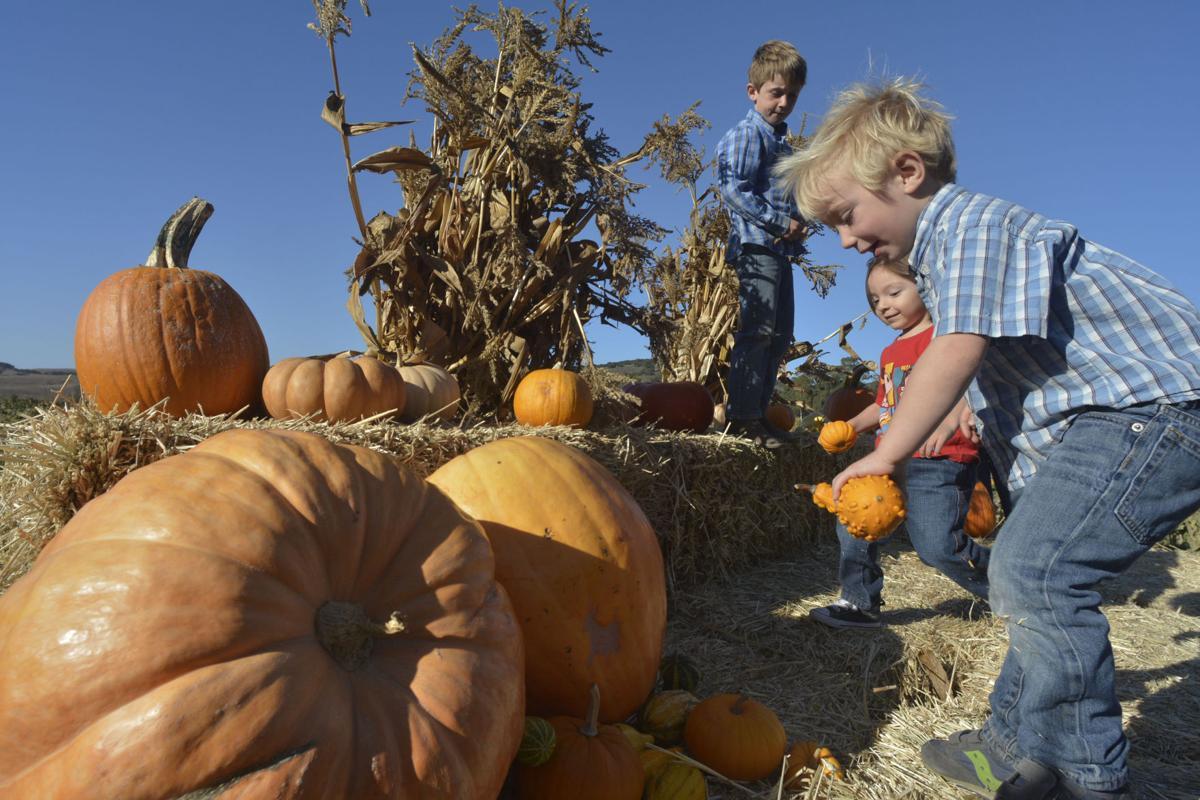 100617 San Julian pumpkins 02.jpg