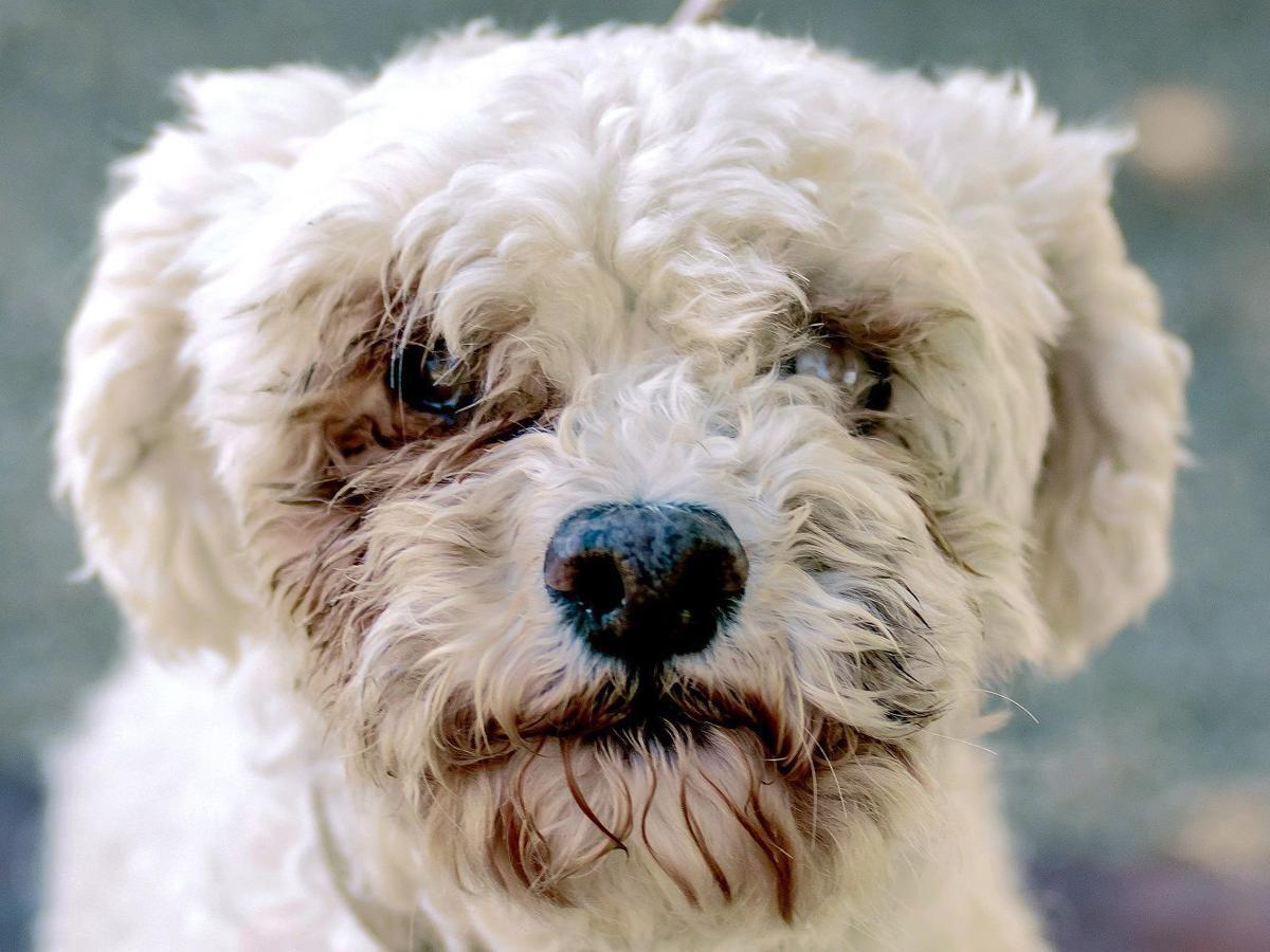 CAPA Pet of the Week -- Pollyana