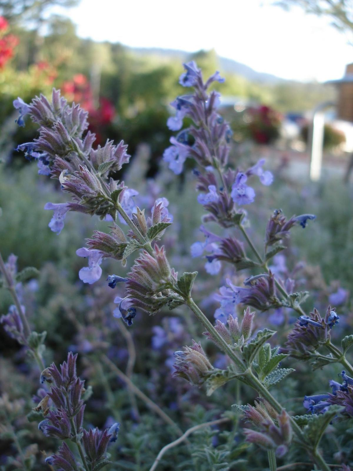 Herbs add spice to life