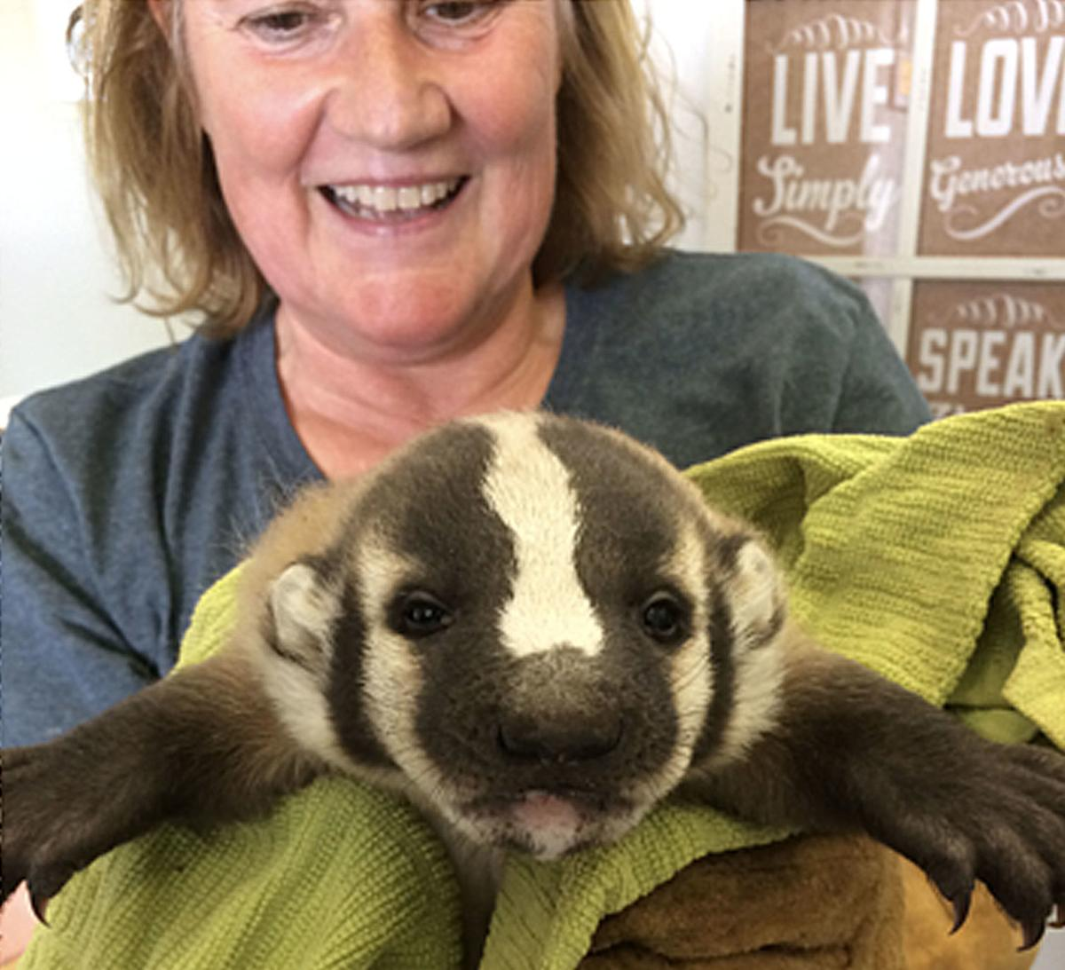 Wildlife Care Network looking for North County volunteers