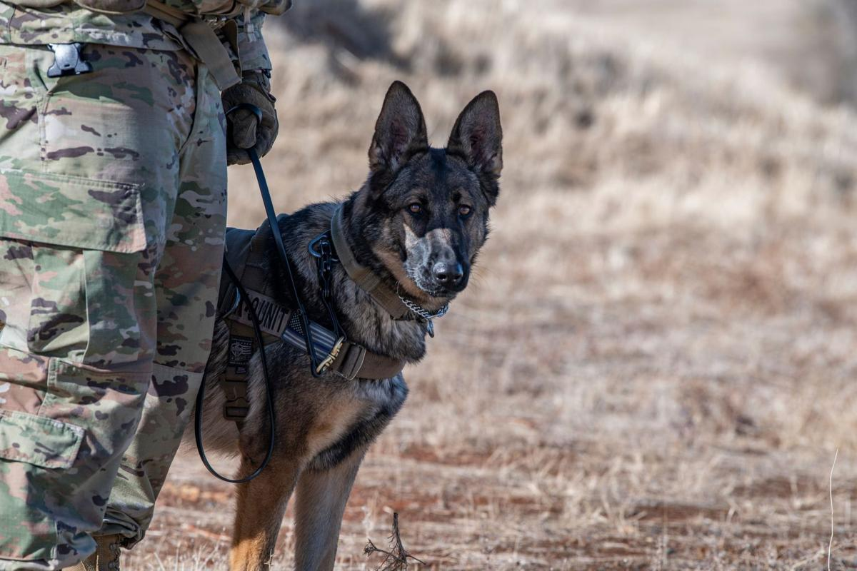 Sofi, 9th Security Forces Squadron military working dog
