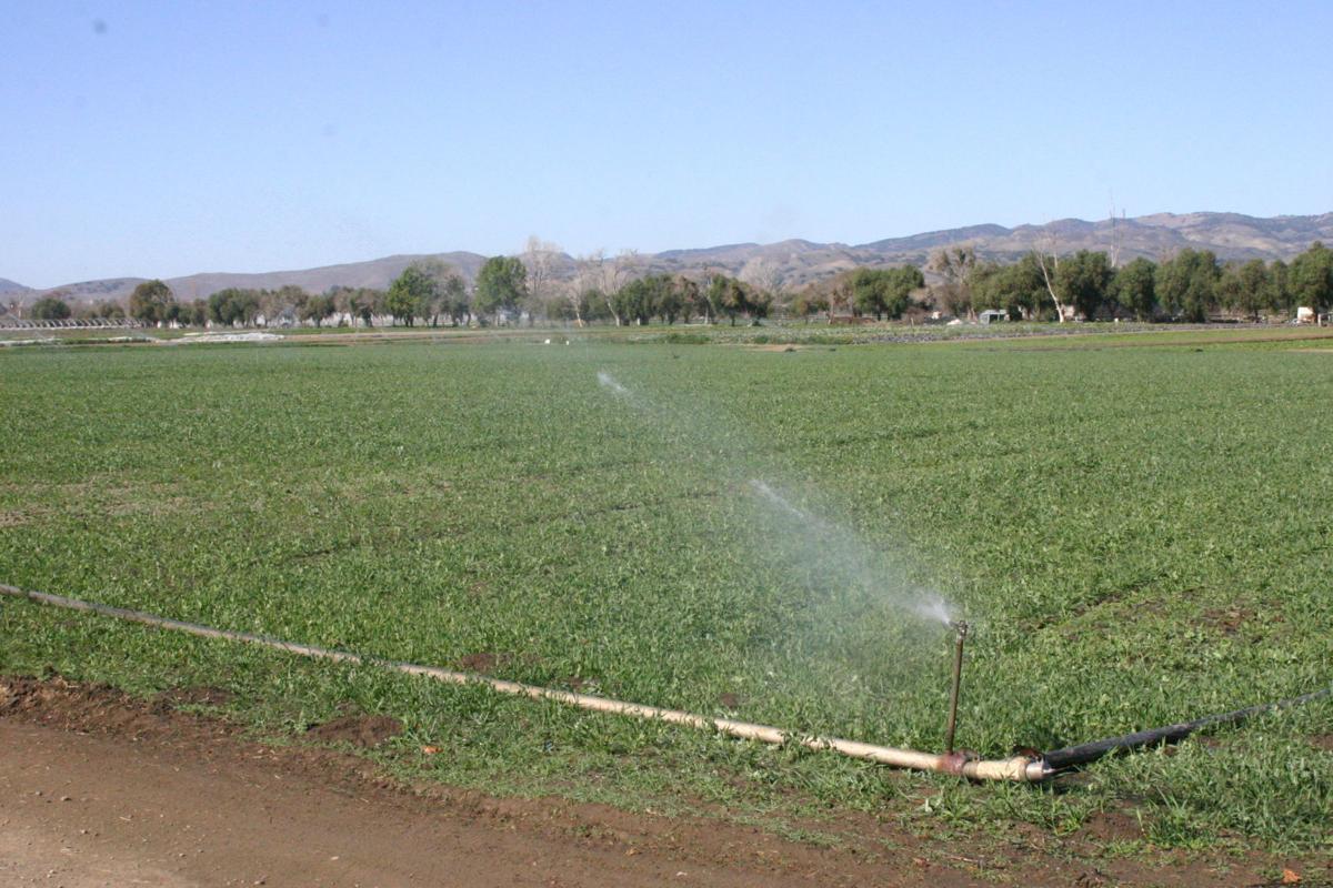 Irrigated lands in Buellton