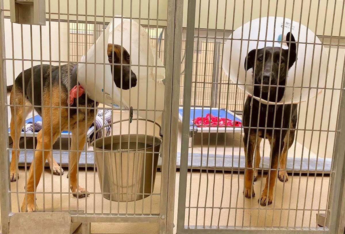 030521-smt-news-animal-shelter-002.jpg