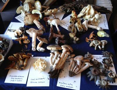Los Alamos Mushroom Festival
