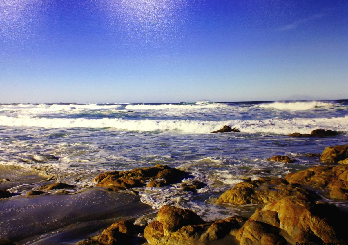 """17 Mile Drive"" by Barbara Snyder"
