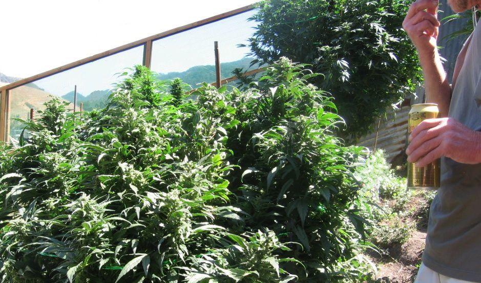 Cannabis plantation visitor