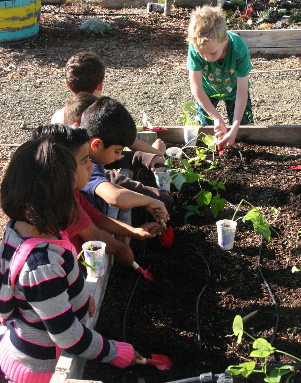 Oak Valley Garden, planting beams