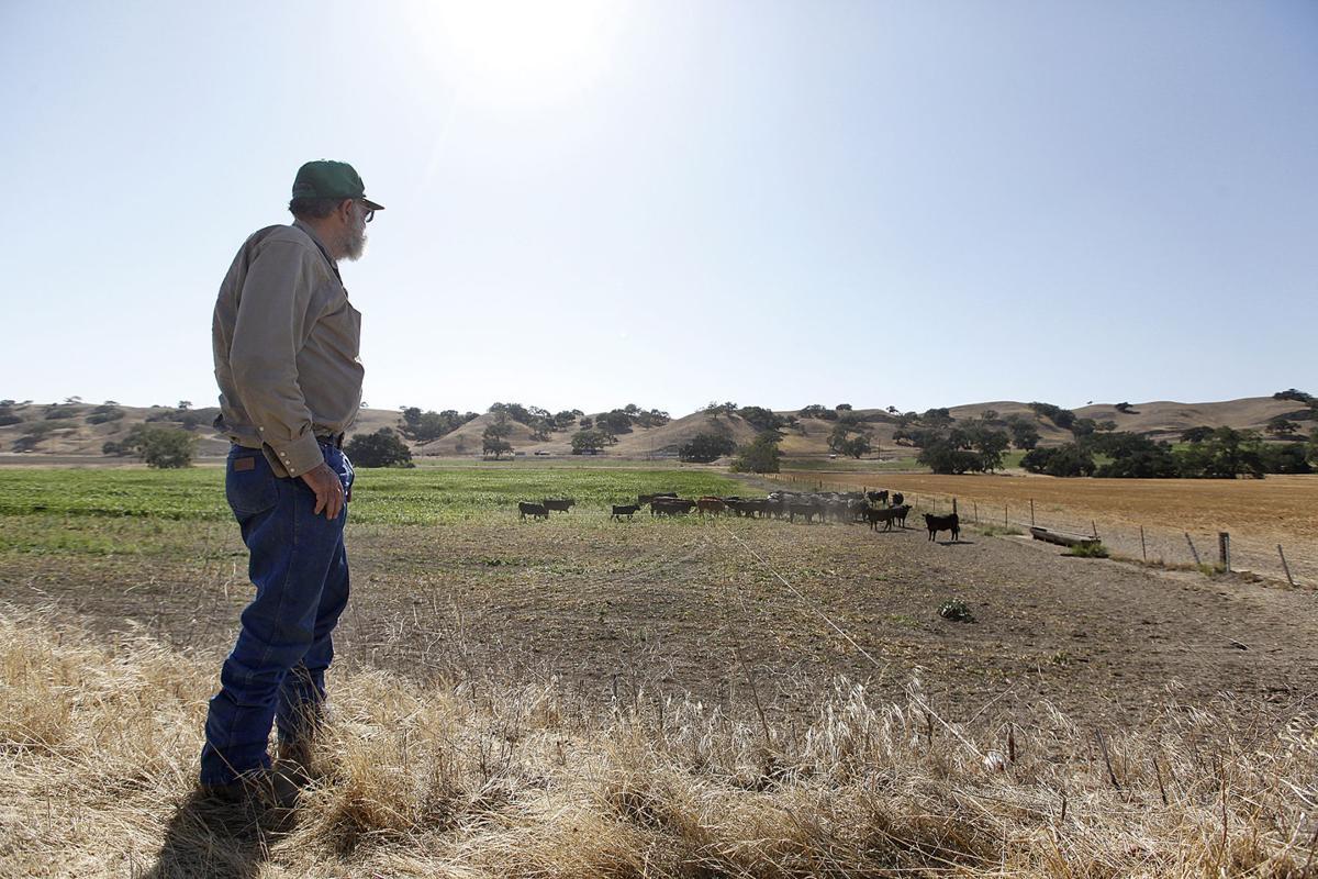 Cattle Ranch 0102A.JPG