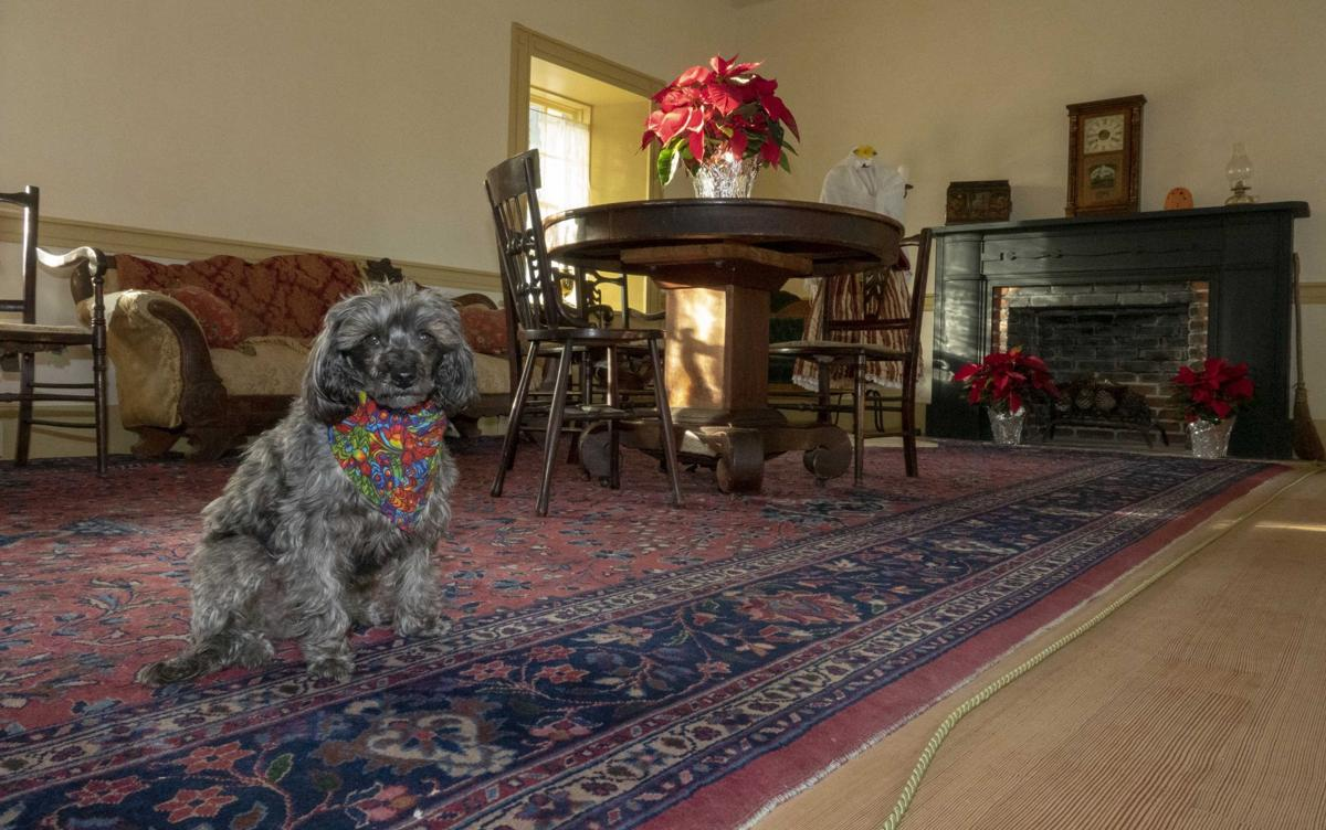 Where's Sparkie? In the living room of this historic home in southern San Luis Obispo County.