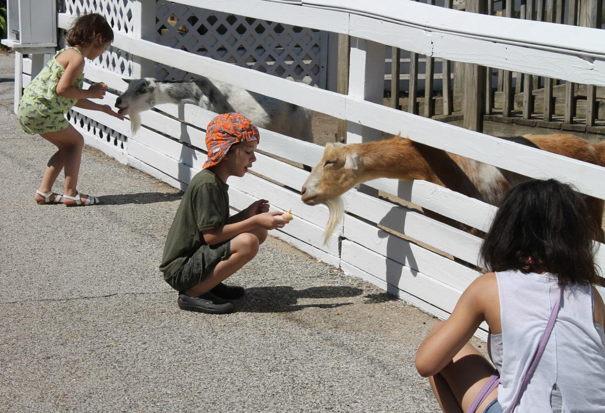 Zoo photo 2