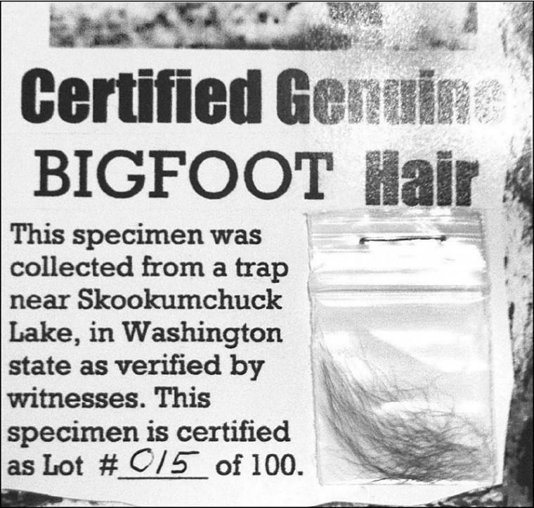 Bigfoot Hair?