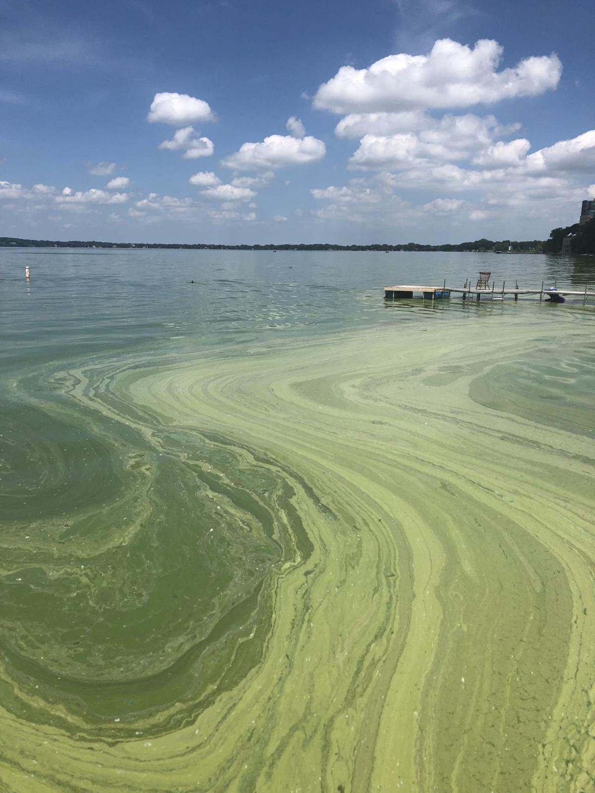 Algae Bloom on Lake Mendota at Union Terrace