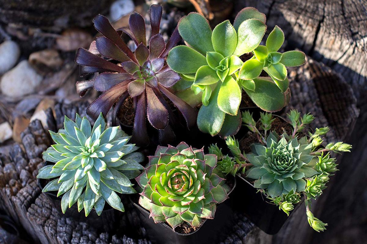 Succulents Are The Easiest House Plants