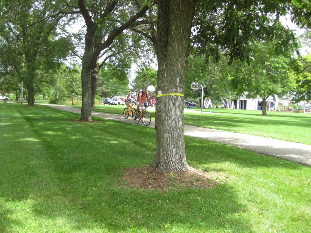 Brittingham Park tree