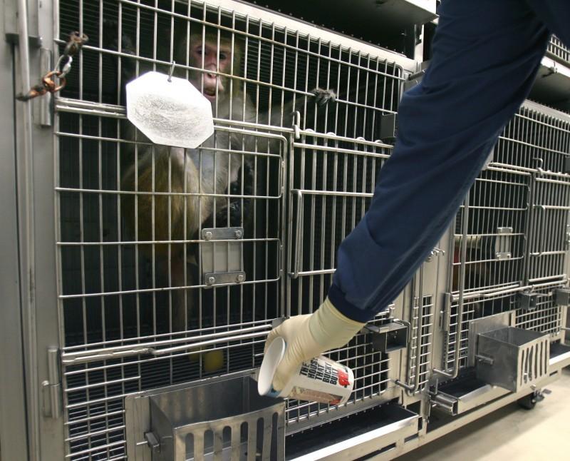 Primate research 1-9