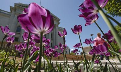 A passerby admires May flowers blooming around the state Capitol. Do April showers bring May flowers? For most plants the first flowering is more tied to ...