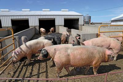 Hog farm (copy)