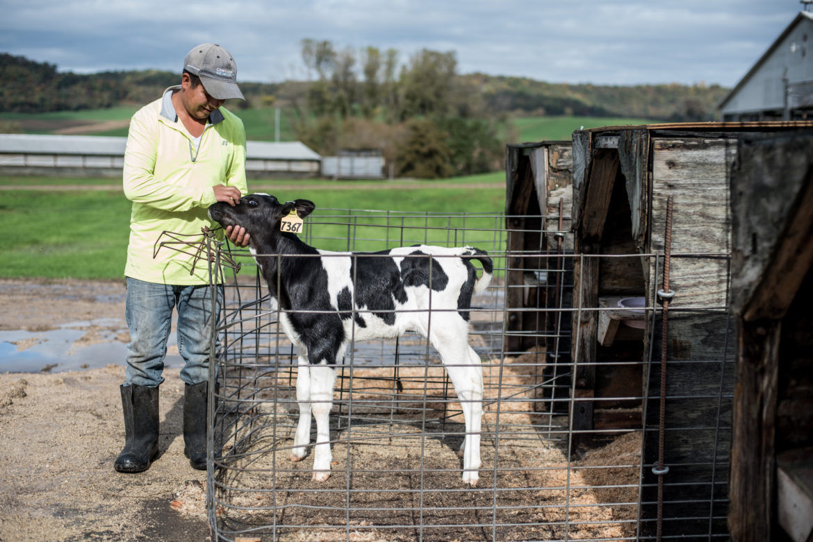 Immigrant works about 70 hours a week on dairy farm