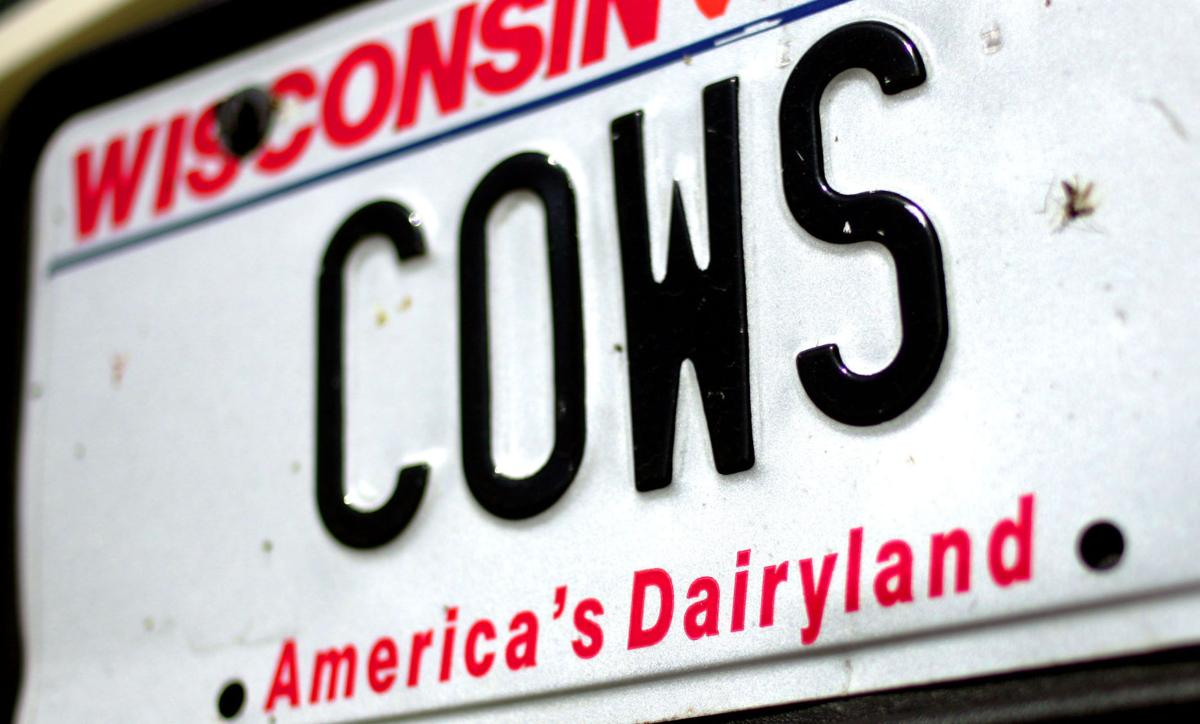 "America's Dairyland license plate ""COWS"""