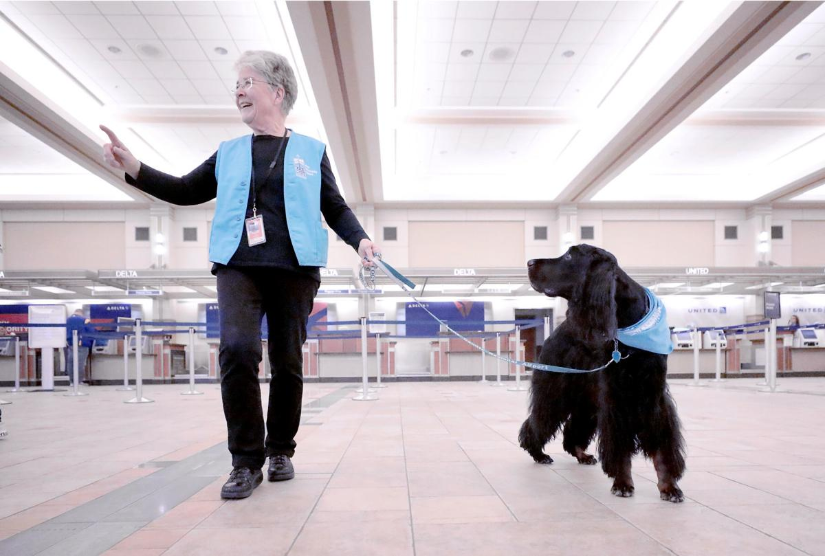 Airport Dog Therapy 1