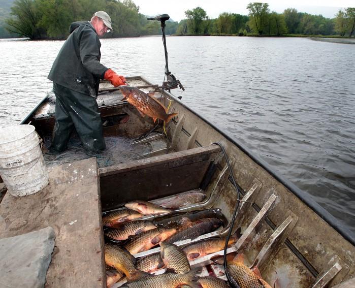 For commercial fishermen, Mississippi River is getting