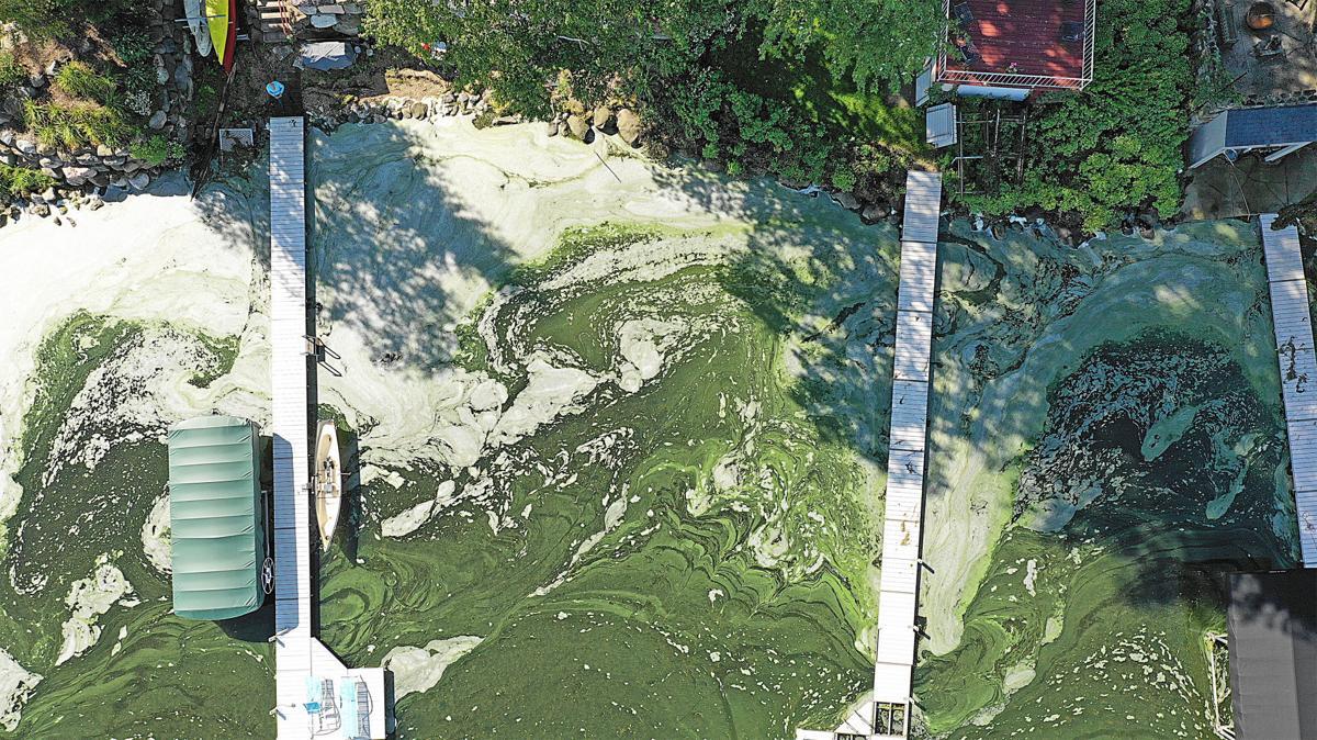 Algae aerial