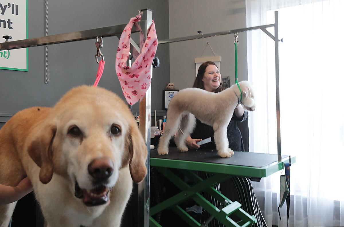 Deb Compton with Bedlington Terrier Ripley