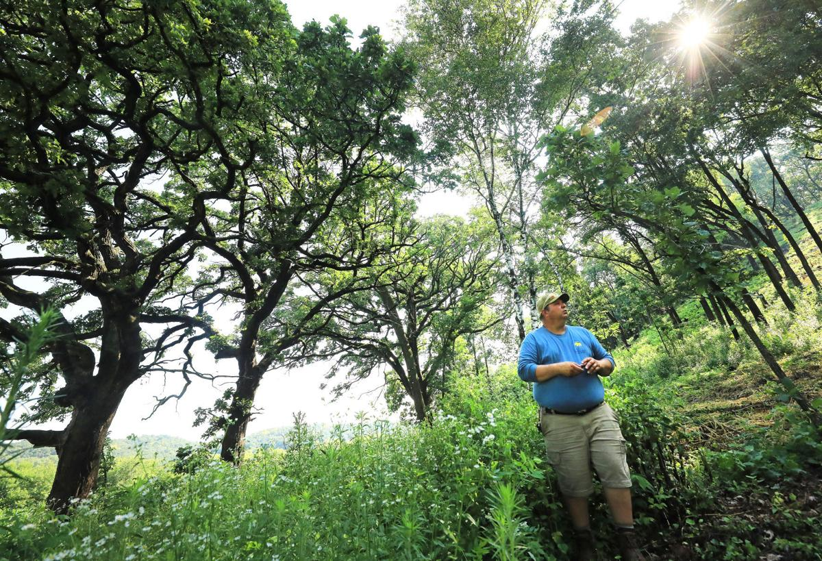 Indian Lake Oak Savanna