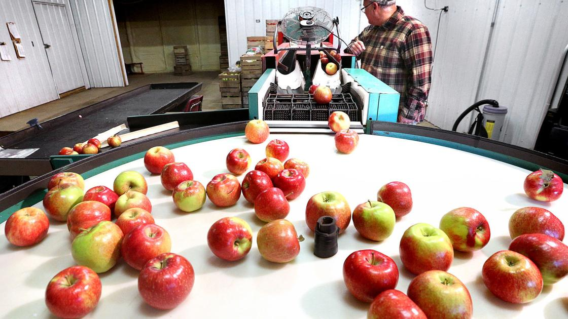 Catching up: Maple Ridge Orchard comes to agreement with state inspectors over cider press