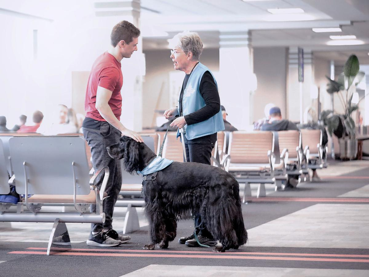Airport Dog Therapy 2