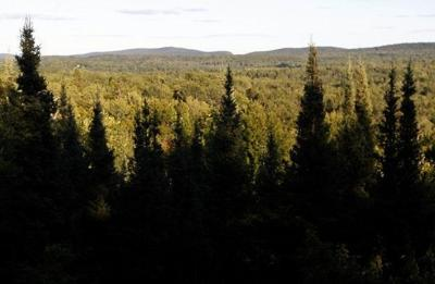 DNR Forestry move
