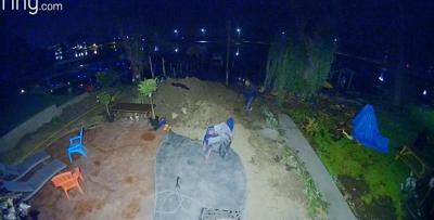 Backyard surveillance video