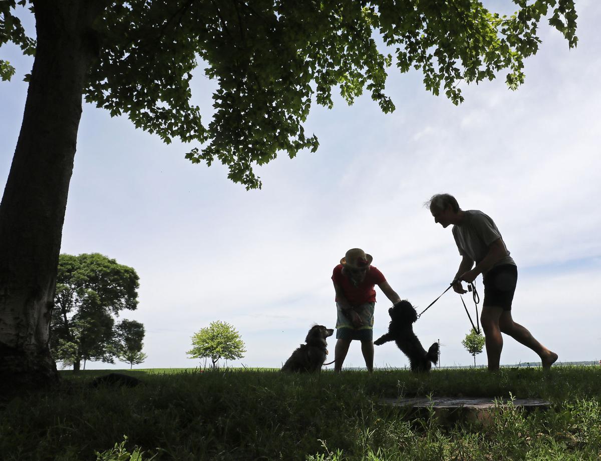 Dogs in Parks.jpg