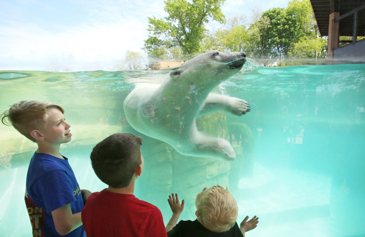 Image Meets Reality At Henry Vilas Zoo >> Henry Vilas Zoo S New Arctic Passage It S A Real Wow Factor Local