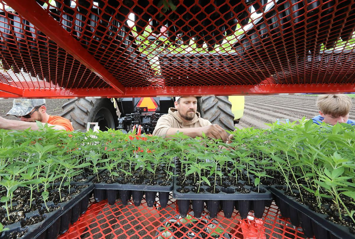 A hemp revival spreads across Wisconsin, creating a new business