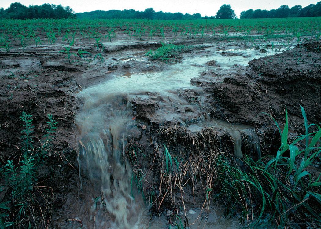 Runoff from farm field