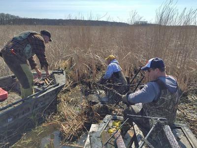 Managing wetlands