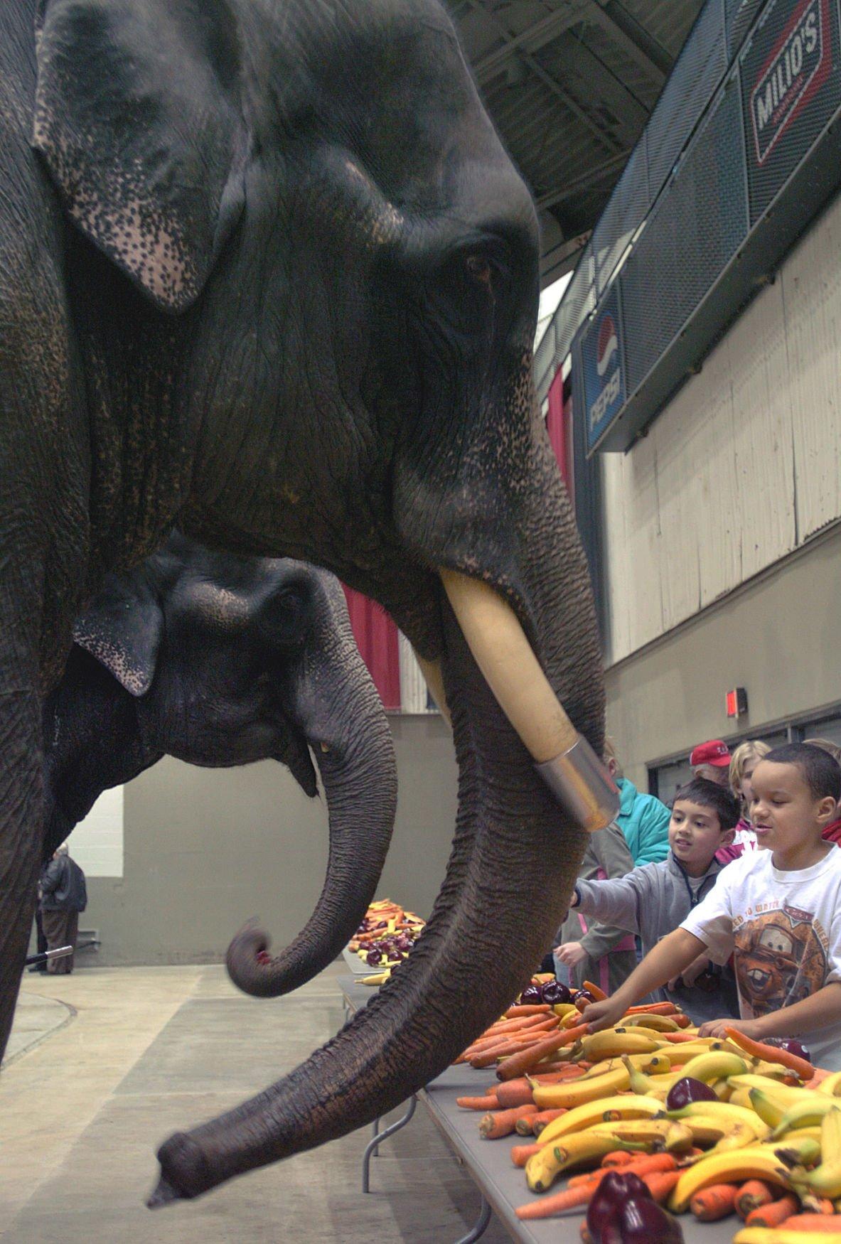 FEEDING ELEPHANTS