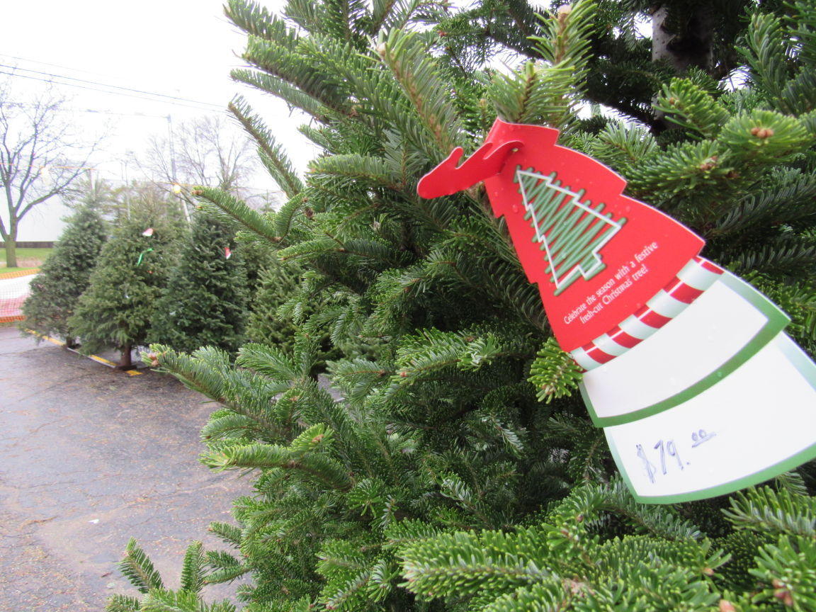 On Retail: Christmas tree sales