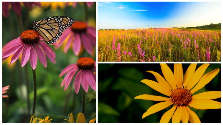 Native Wisconsin Plants
